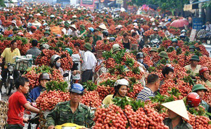 Lychee revenue in Bac Giang reaches 60-year high of US$262.6 million
