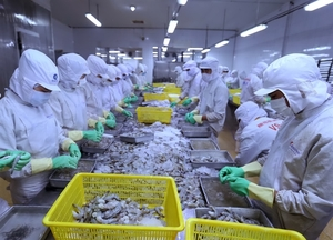 Shrimp exports expected to pick up in 2nd half