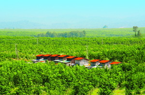 Hoang Anh Gia Lai still controls its agricultural arm