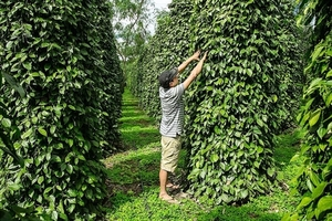 Pepper sector urged to renew growth model
