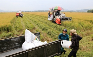 Agricultural exports rake in $26 billionin eight months