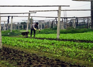 VN to boost use of organic fertiliser