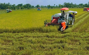 Local rice industry needs technology in preservation and processing