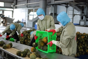 Vietnamese export products face stricter non-tariff barriers in EU