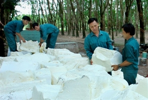 Dong Phu Rubber fulfils half of profit target