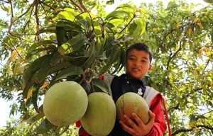 Vietnamese mangoes exported to Chile
