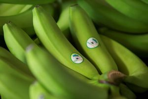 Local firm exports first batch of bananas to China