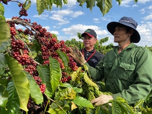 Nestlé programme helps increase coffee farmers' incomes