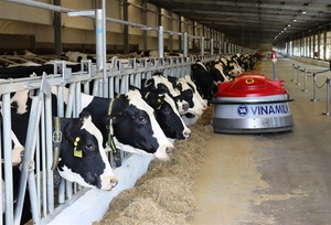 Numerous dairy firms enjoy profit growth in Q3