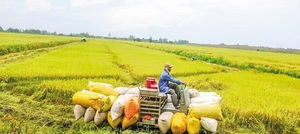 Mekong Delta businesses should work with Vietnamese-owned counterparts in the US: experts