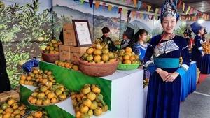 Week of Muong Khuong mandarins opens in Ha Noi