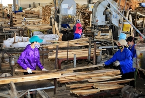 Workshop calls for responsible timber trade practice