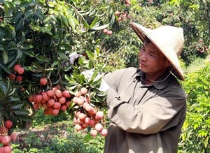 Export target of $41 billion within reach foragricultural sector