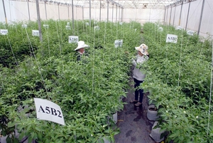 Hi-tech agriculture enterprises need easier access to credit