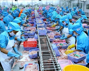 VN seafood exporters not too worried about COVID - 19