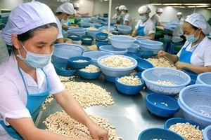 Viet Nam's cashew exports to US up in two months