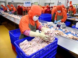 Russia to import Viet Nam's processed chicken