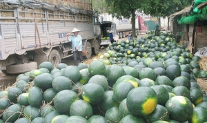 Viet Nam, China discuss ways to boost agriculture trade