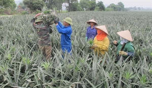 Room for Vietnamese farm produce exports to Singapore amid COVID-19