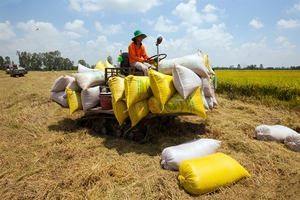 Rice growing localities, exporters want export limits scrapped