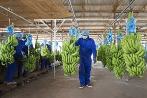 Thaco to increase its ownership in HAGL Agrico to nearly 29 per cent