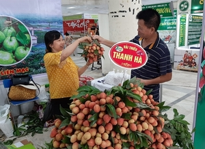 Thanh Ha lychee fair opens in Ha Noi