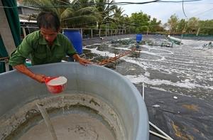 Ca Mau shrimp industry picks up