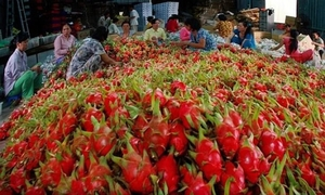 MoIT requests local firms to control food safety for exports to China