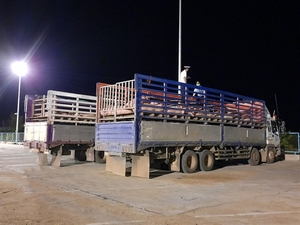 Viet Nam receives first batch of imported live pigs from Thailand