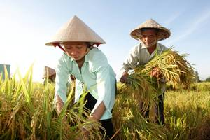 Bayer to support 2m smallholder farmers in developing countries impacted by COVID-19
