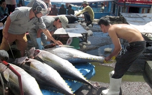 EU to remove tariffs on Vietnamese tuna once trade deal takes effect