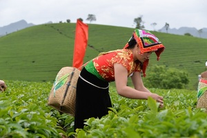 Tea businesses need restructuring to add value