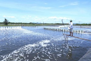Viet Nam shrimp exports to surge as demand increases