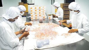 Support for domestic pharmaceutical industry to rise in Viet Nam