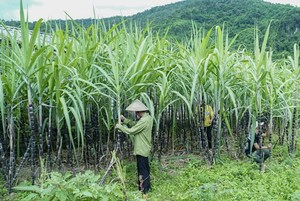 Viet Nam initiates anti-dumping investigation on sugar imported from Thailand
