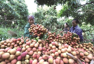 Agricultural exportsset to join more global value chains as new FTAs take effect