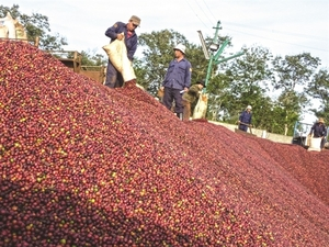 Coffee exports, consumption drop due to COVID-19
