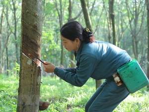 Vietnam Rubber Group to raise natural rubber output under its own brand