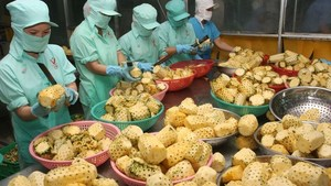 VN focuses on processing of agricultural produce for export