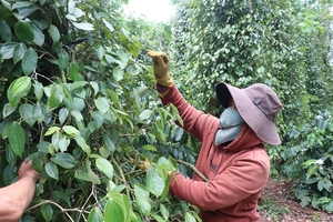 Partnership for sustainable production and trade of Vietnamese pepper launched