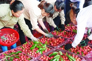 Farming, forestry, seafood export value up almost 20% in Q1