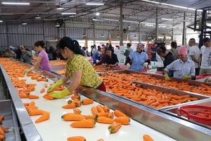Agriculture sector needs to develop raw materials to reduce dependence on imports