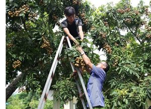 Conference to promote Hung Yen's farm produce