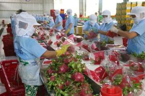 Project looks to bolster Viet Nam's dragon fruit exports to Europe