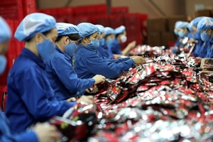 Productive and diversified private sector key to Viet Nam's economic transformation