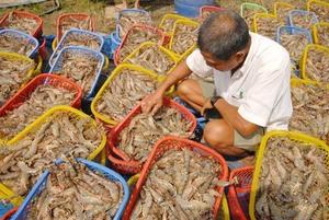 PM sets bar high for shrimp exports