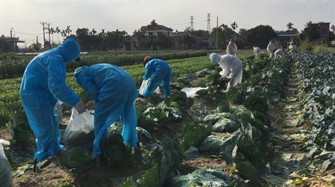 Trade ministry helpingHai Duong farmers sell produce
