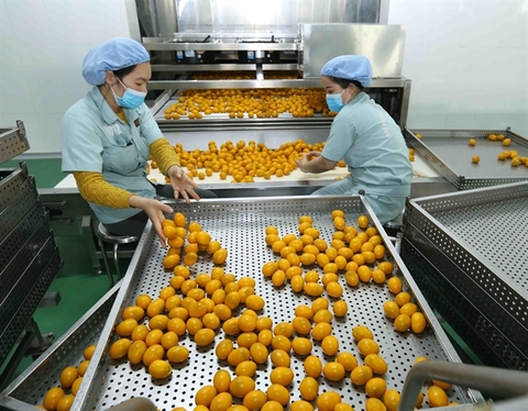 Future is bright for Viet Nam's livestock producers